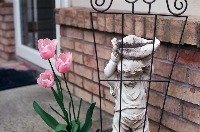 Tulips and the statue
