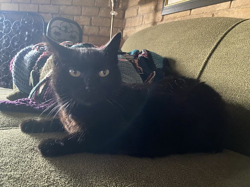 Birthday Baby Panther