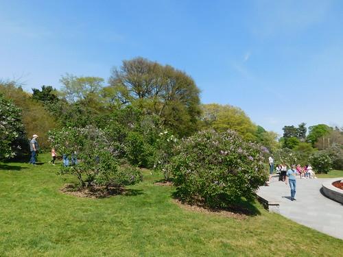 Rochester Lilac Festival 2021