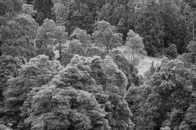 Trees, Hillside