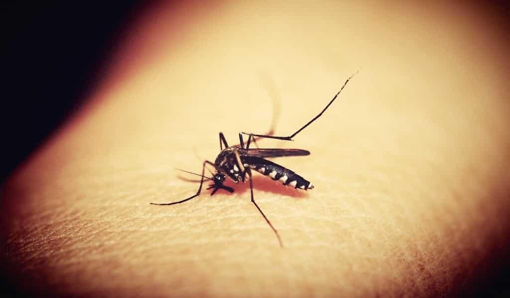 un-nouvel-outil-CRISPR-contre-les-maladies-venant-des-moustiques