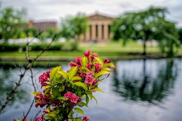 Centennial Park flowers, by the Nashville Parthenon