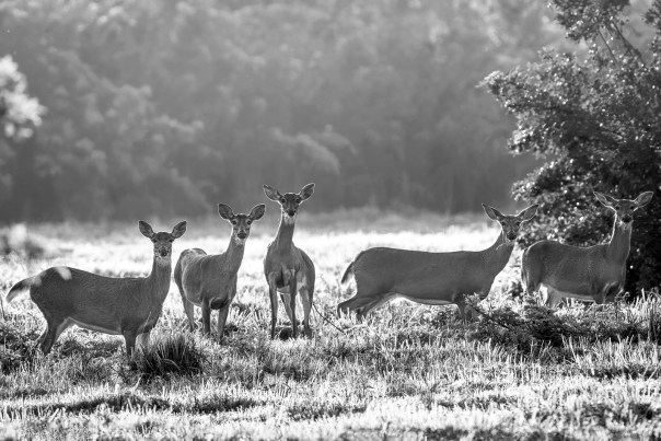 """""""Who are you lookin' at?"""" (B&W)"""