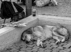 Read the paper - time for a snooze. Athens.