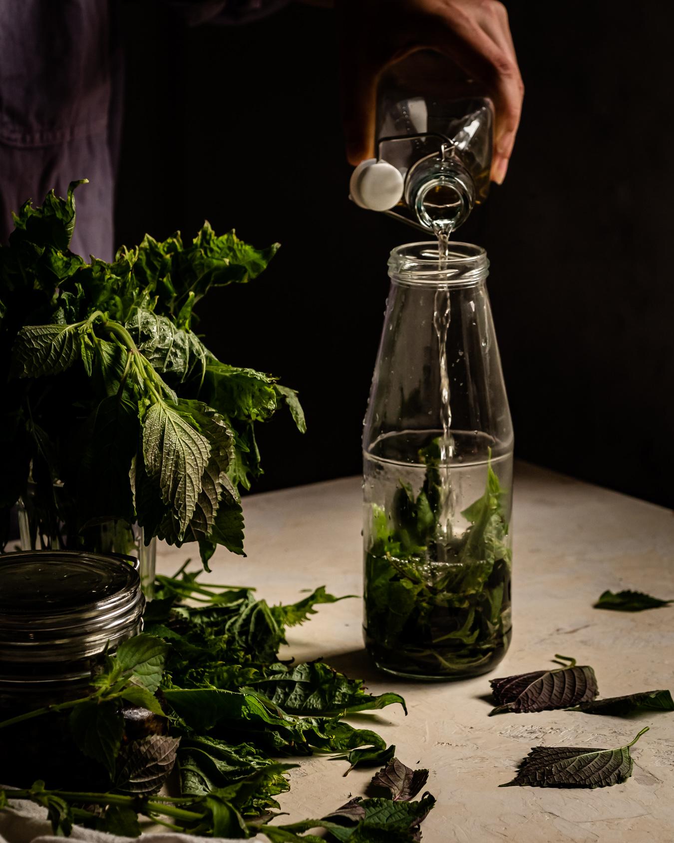 shiso infused vinegar