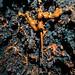 Tunnels de lave des lichens Rando-Volcan.com CHEVILLE Vincent (30)