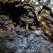 Tunnels de lave des lichens Rando-Volcan.com CHEVILLE Vincent (31)