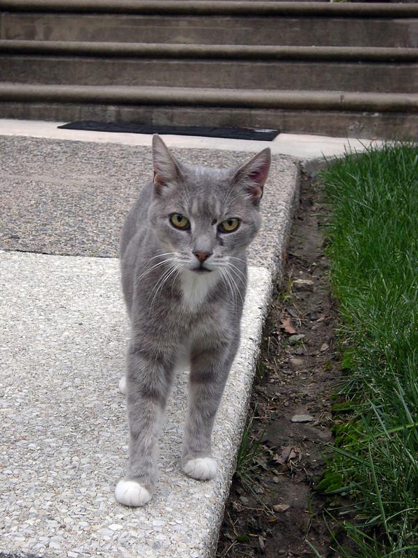 Lansdowne Kitty