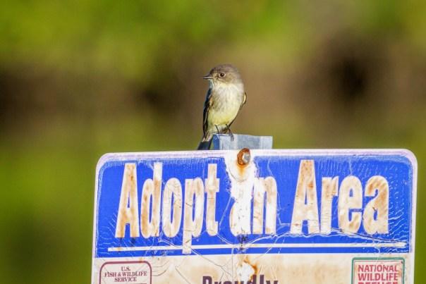 Adopt an Area