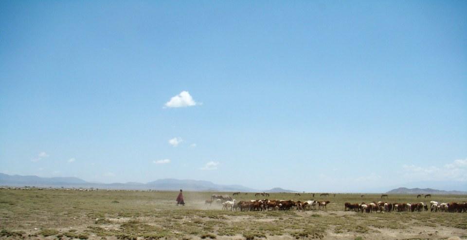pastores rebaño de vacas Etnia Masai Area Ngorongoro Tanzania 08