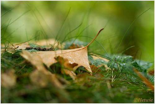 autumn leave (7D032147)