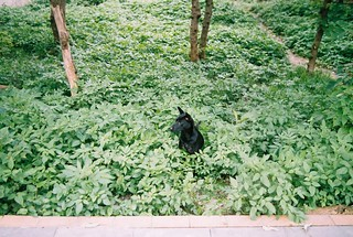 when a black dog in green
