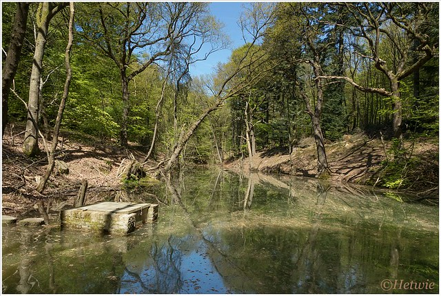 Het groene water (HP010823)