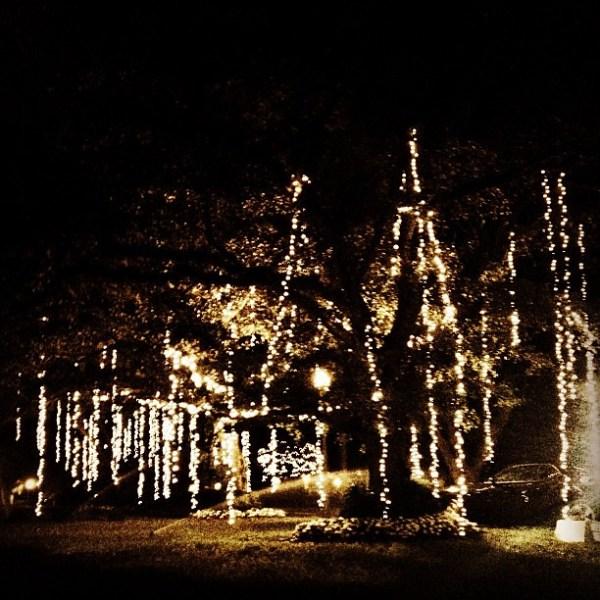 christmas lights miami # 47