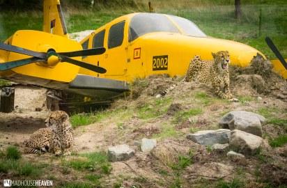 Safaripark Beekse Bergen - 0035