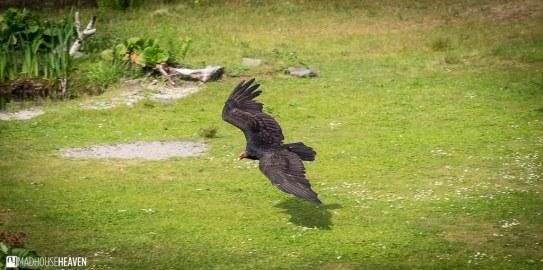 Safaripark Beekse Bergen - 0079