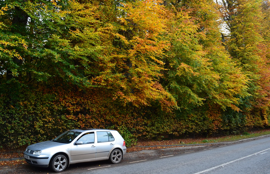 Tour Scotland Photograph Autumn Meikleour Beech Hedge Perthshire October 27th 02