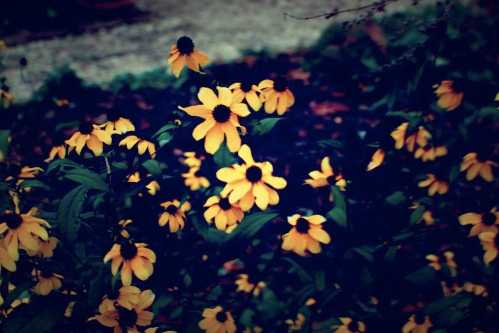 williamsburg blooming