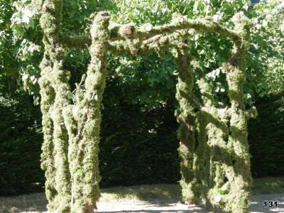 Forest Tree Arch