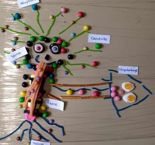 Atelier bonbons-neurones