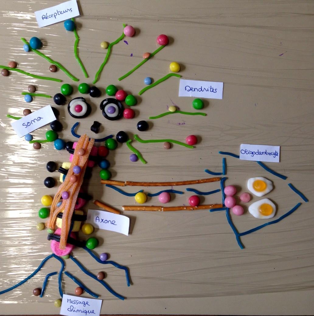 Neurone moteur et oligodendrocyte - périscolaire.
