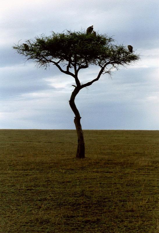 Kenia2002-09-14