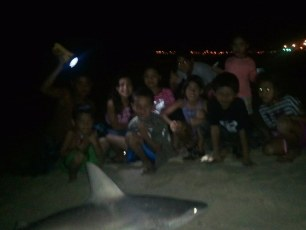 Big reef shark