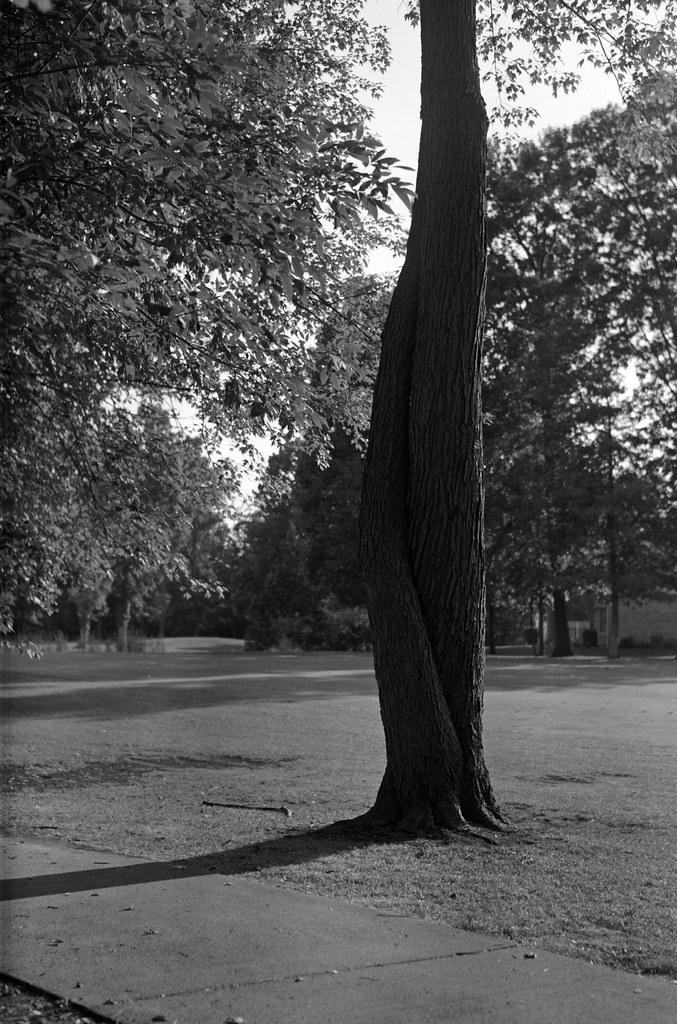 Golf course tree