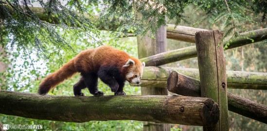Safaripark Beekse Bergen - 0357