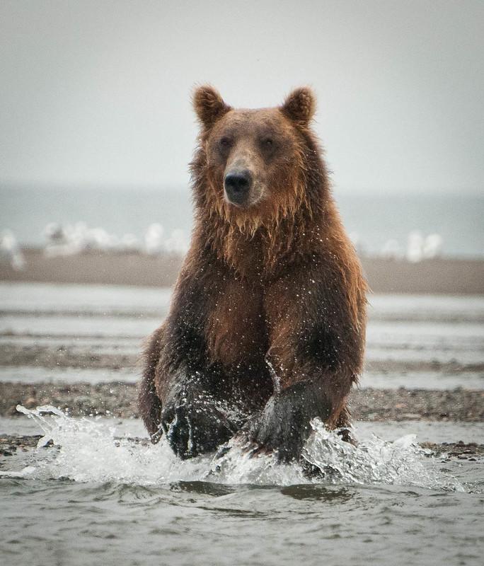 Waiting on the Salmon Run