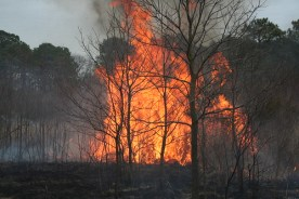 Photo of woodlands wildfire