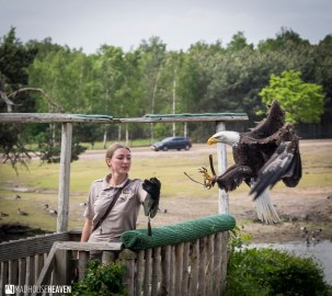Safaripark Beekse Bergen - 0127
