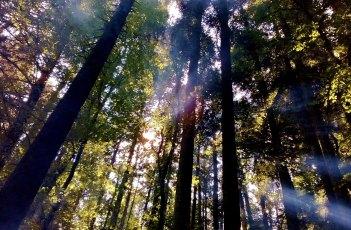 Sunshine Forest 2