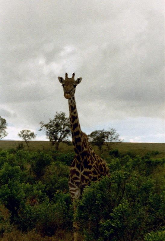 Kenia2002-07-19