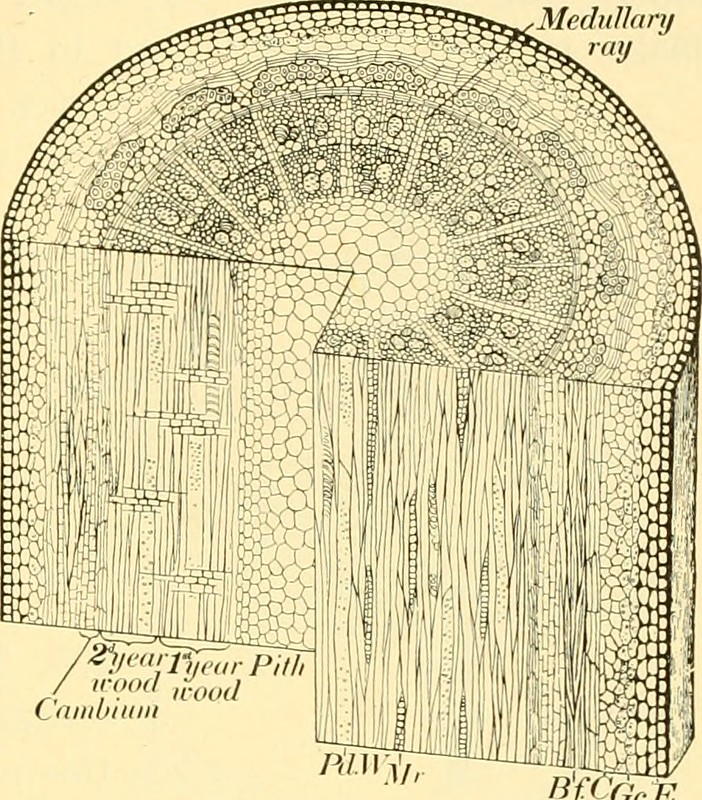 """Image from page 192 of """"Elementary biology; an introduction to the science of life"""" (1924)"""