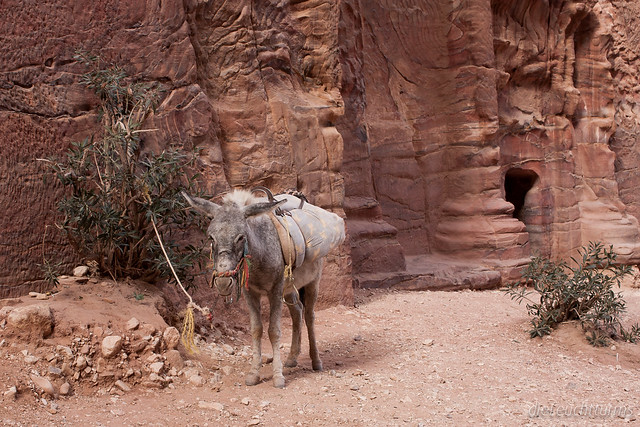 Beduinischer Kleintransporter