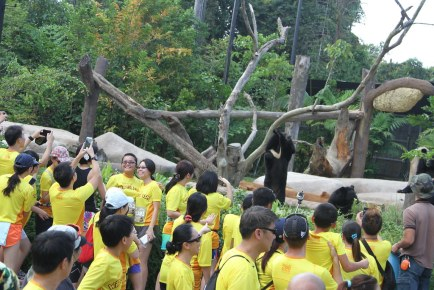 Safari Zoo Run 2015