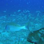 Reeffish vol1.01 (50)