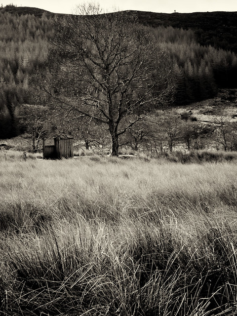 Old shed and tree, near Strontian