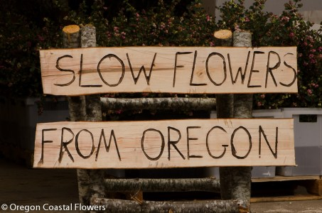 Natural wood engraved signs
