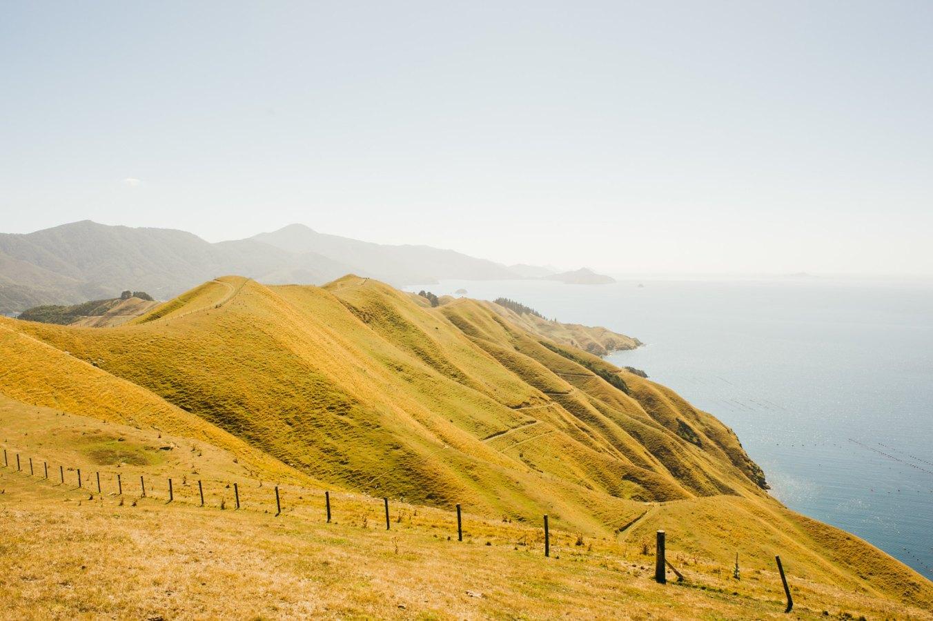 NZ_Digital_41