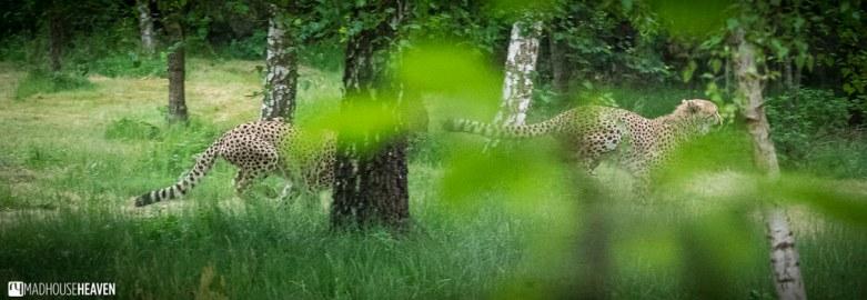 Safaripark Beekse Bergen - 0315