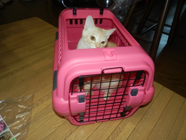 In a cat carrier | Newly bought | Jim Shine | Flickr