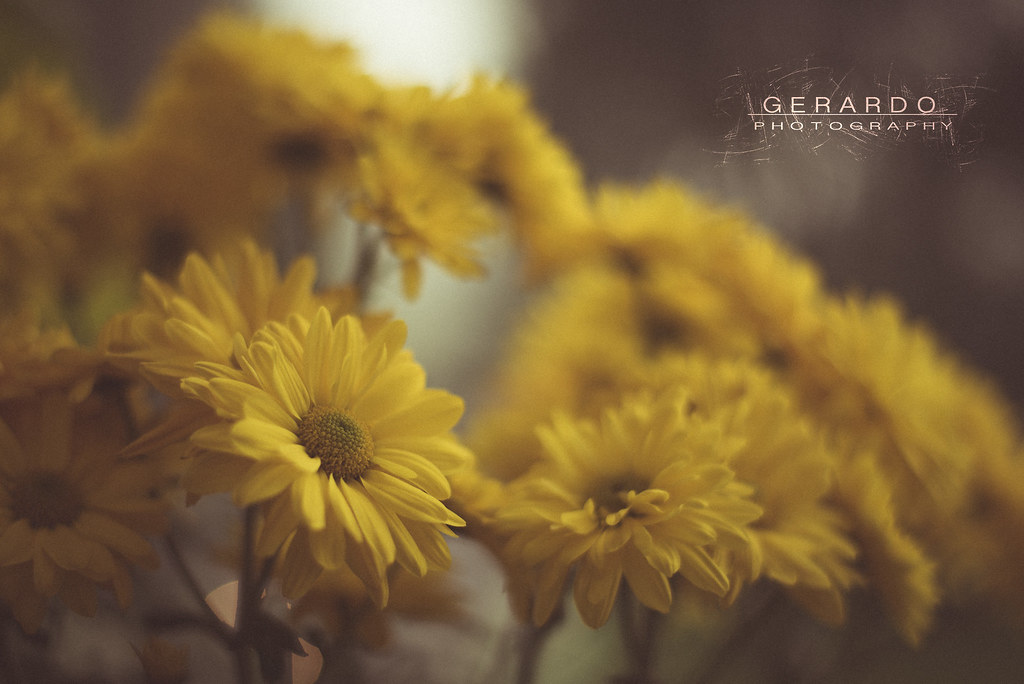 Flowers Nikon D750 Nikon 50mm 1 8g New Edition To The