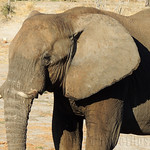 DIA-9-ELEPHANTS-SANDS-ELEFANTE