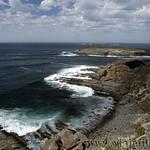 Viajefilos en Australia. Kangaroo 36