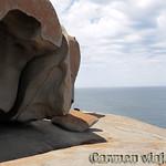 Viajefilos en Australia. Kangaroo 47