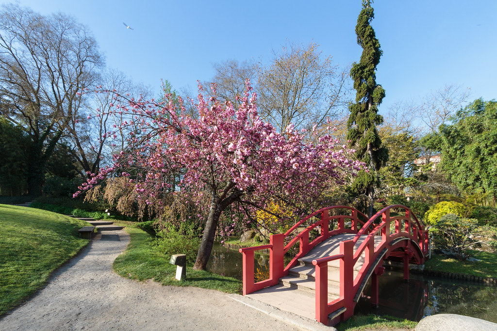 F 234 Te Des Cerisiers 2015 Jardin Japonais De Compans