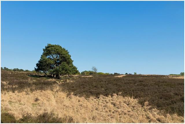 heidelandschap (HP010872)