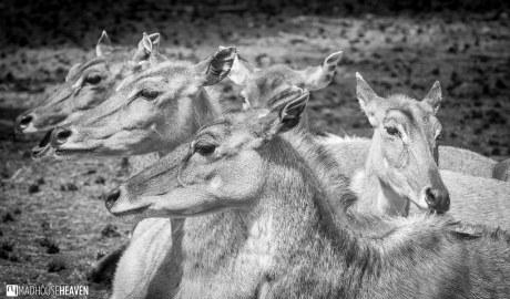 Safaripark Beekse Bergen - 0054